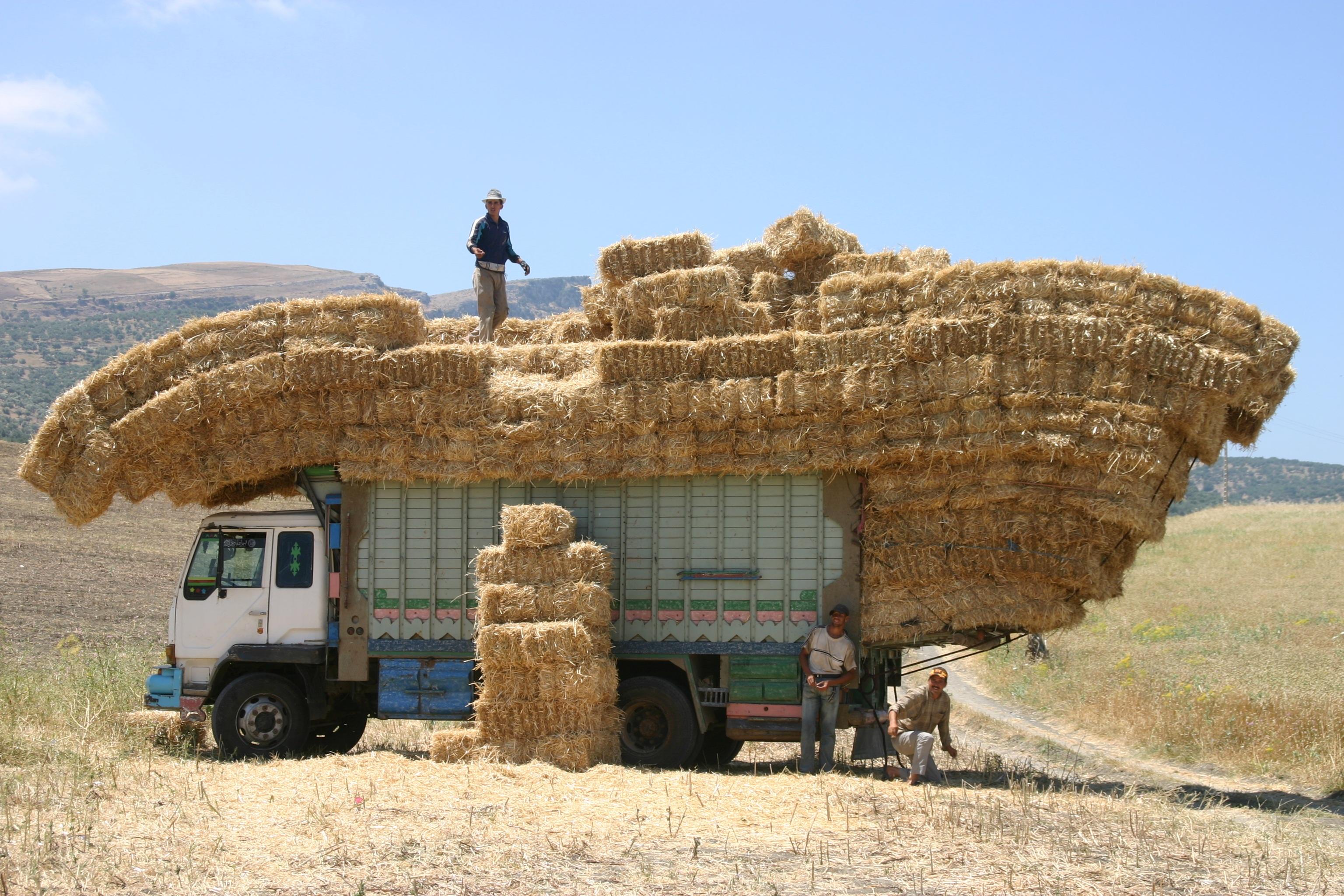 Marokko Landwirdschaft