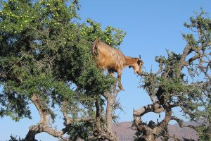 marokko-reise-natur